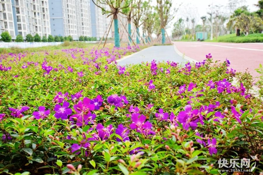 快来打卡,郁江公园今天起重新开放啦!风景更加漂亮
